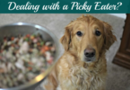 How to Get a Picky Dog to Eat - Tips, Tricks and Helpful Tools
