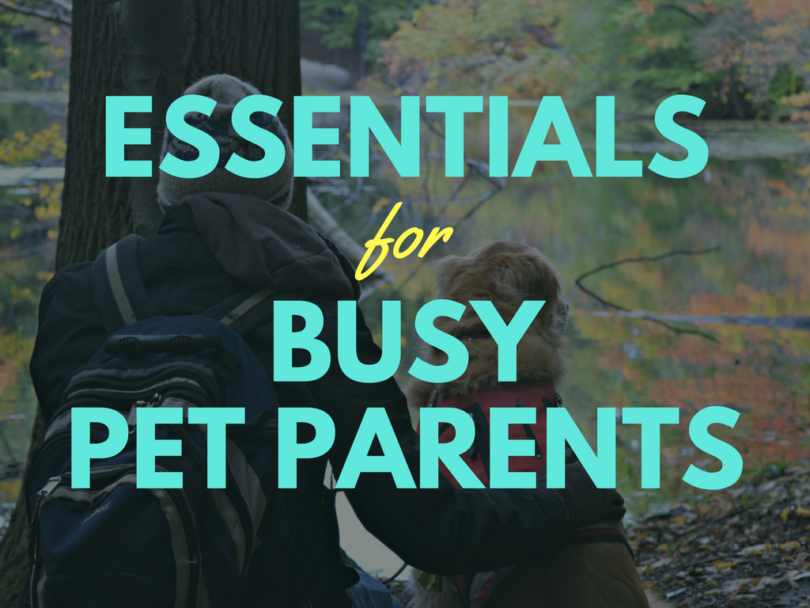 Our favorite products for busy pet parents