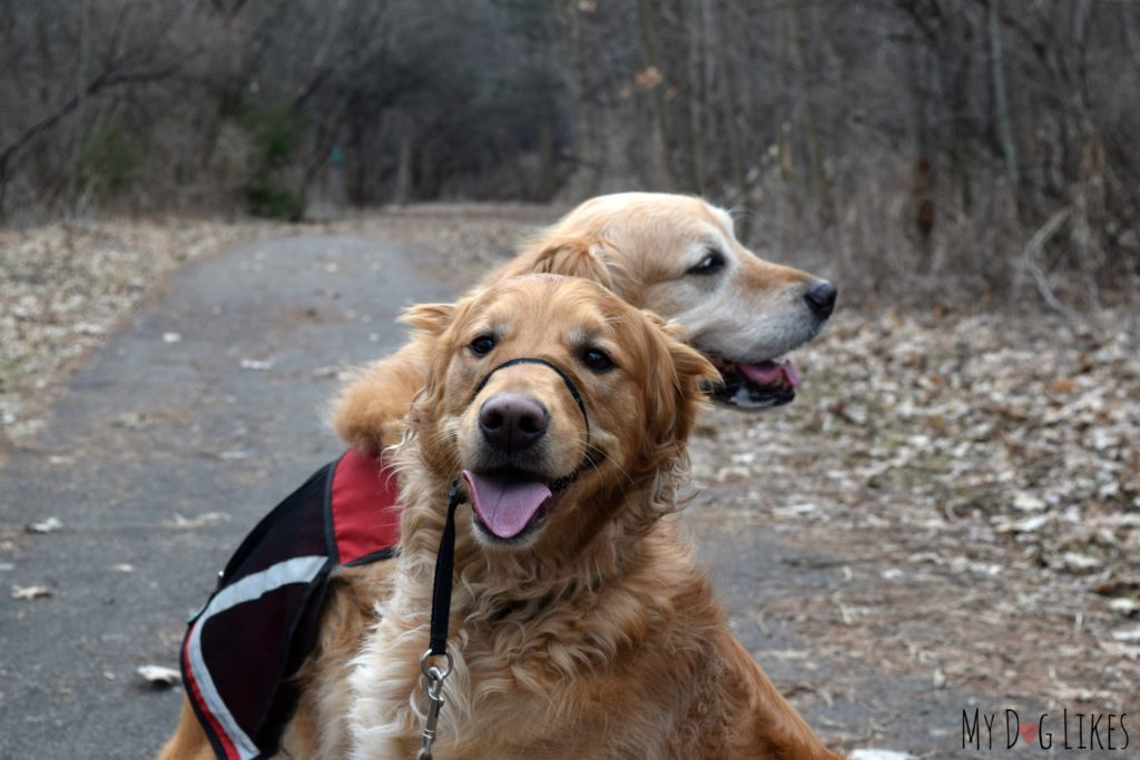Hiking with the dogs through Bullock's Woods