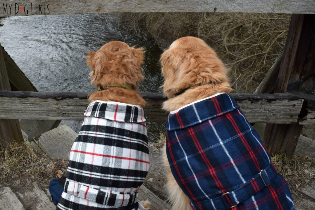 Harley and Charlie looking for a spot to fish!