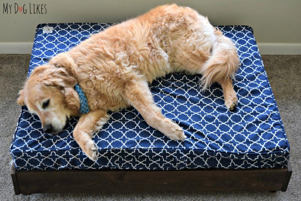 Harley lounging on a large orthopedic dog bed from eLuxurySupply.com