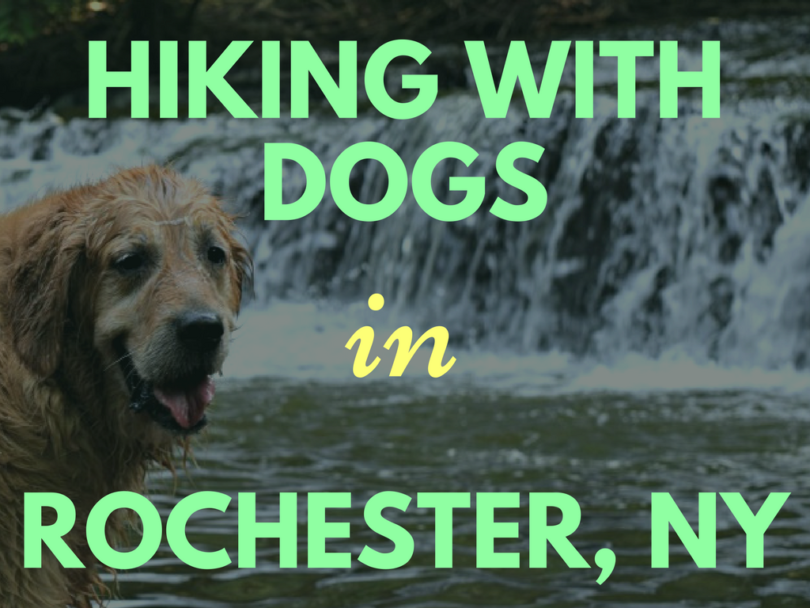 Dog Friendly Hikes in Rochester, NY