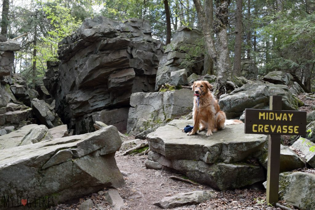 Charlie posing on the rocks at the Midway Crevasse