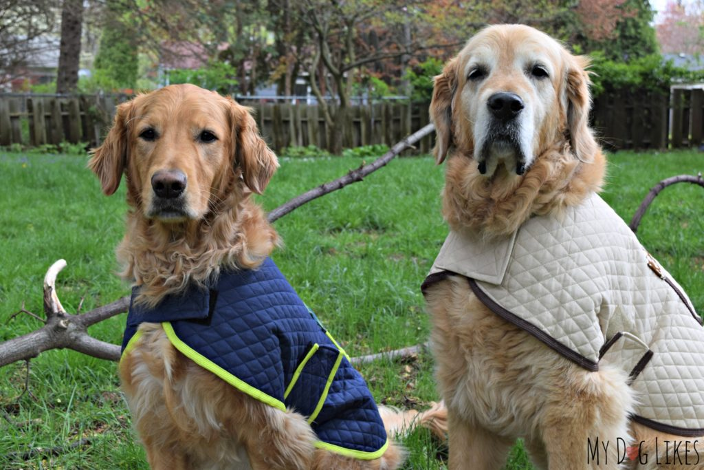 Harley and Charlie modeling their coats from D&M Dog Fashions