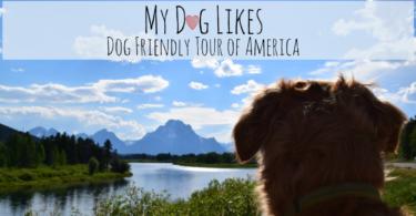 MyDogLikes 2017 Road Trip Home Page