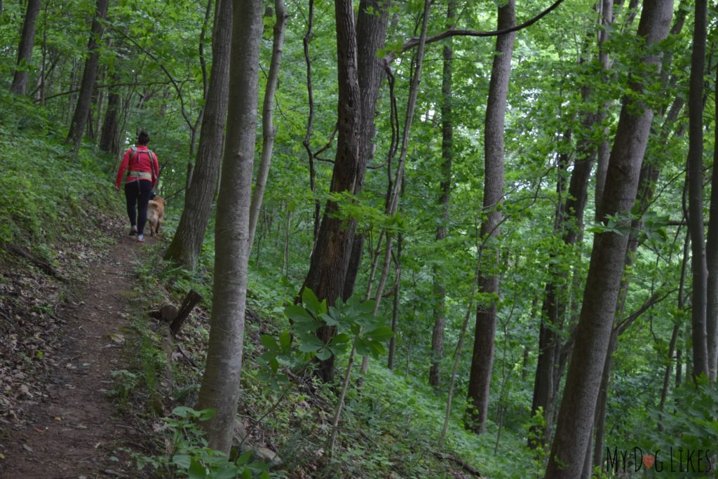 Navigating the steep hill via switchbacks on the Lower Loop Trial