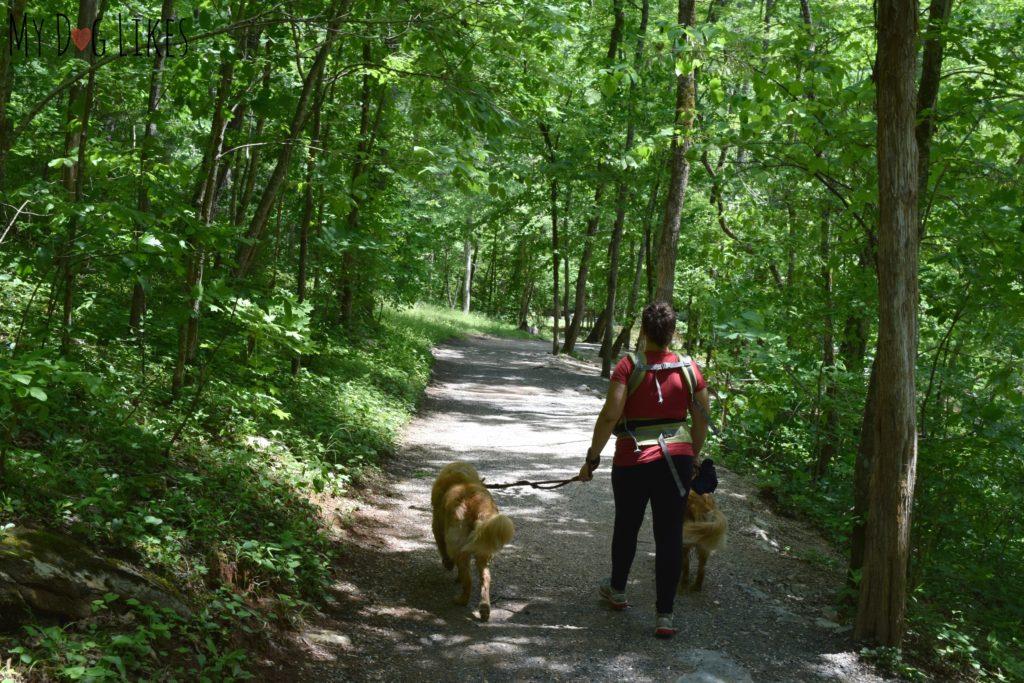 Walking along the Cedar Creek Trail with dogs