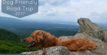 We spent day 13 of our #MyDogLikesAmerica hiking at Humpback Rocks near Charlottesville, VA