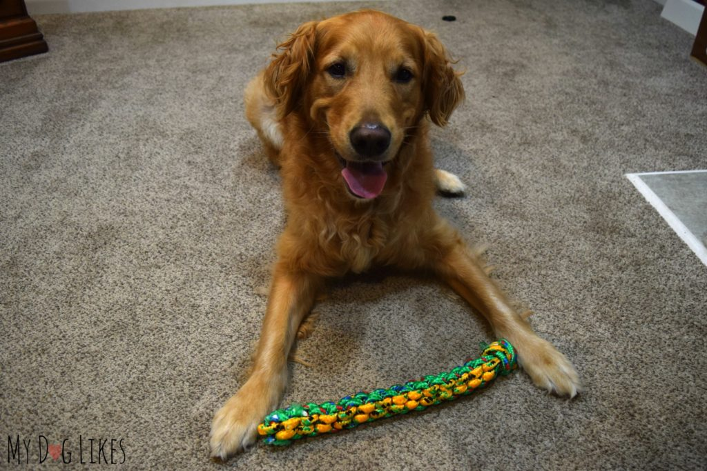Teaching a dog to pick up a toy with positive reinforcement