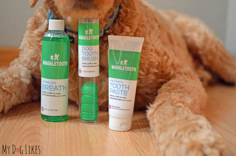 Learn how to keep up with your dog's dental health in our Waggletooth review