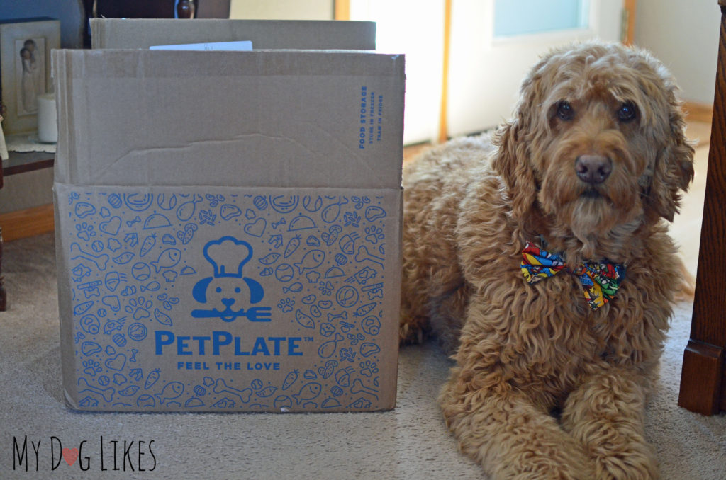 Petplate testimonial from Spencer the Goldendoodle!