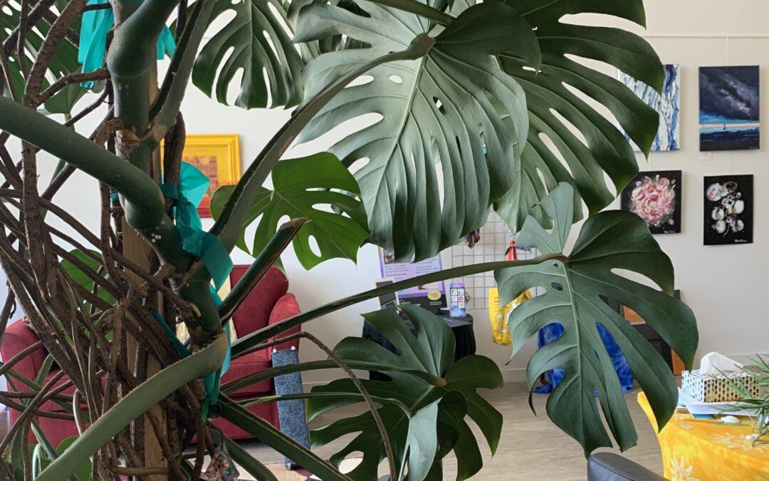 My Epic Plants!