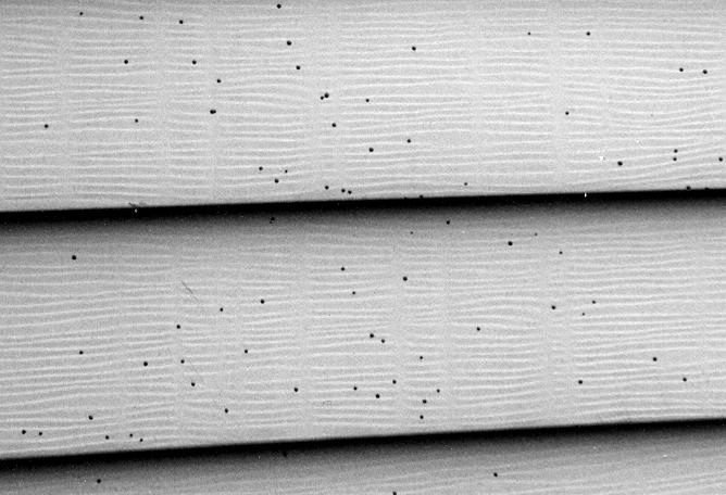 Artillery Fungus on home siding