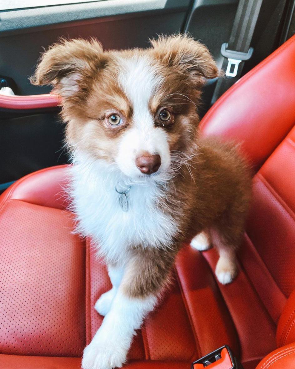 SF Pet Taxi Service