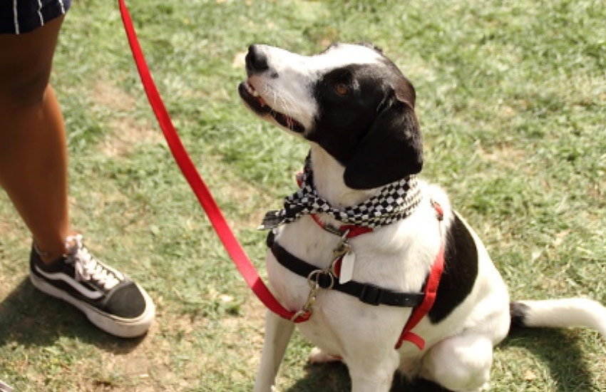 Dog Collars and Harnesses