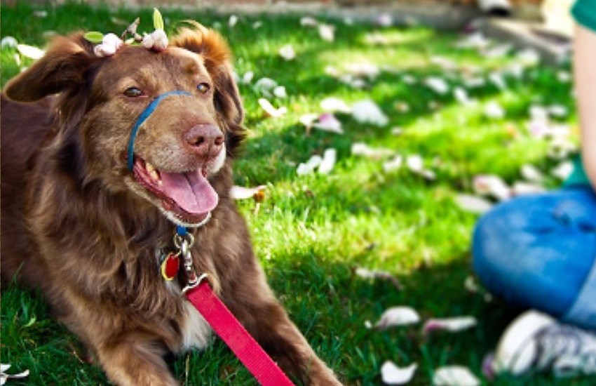 Headcollar for Dogs