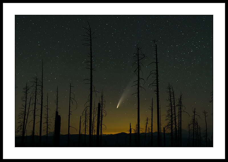 Comet NEOWISE Through Burned Trees - Night Sky Photography, Oregon