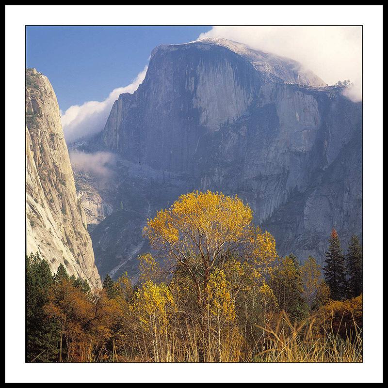 Autumn Tree on Valley Floor - Yosemite National Park, California