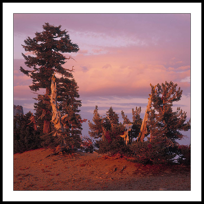 Trees at Sunset - Crater Lake National Park, Oregon