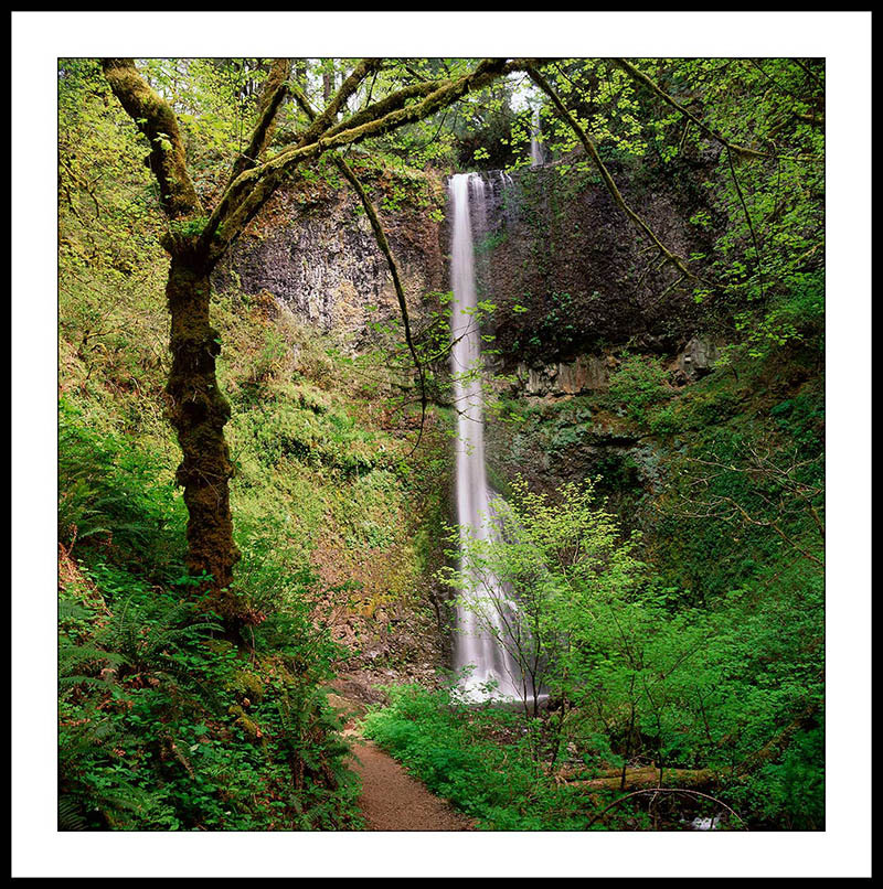 Double Falls and Trail in Spring - Silver Falls State Park, Oregon