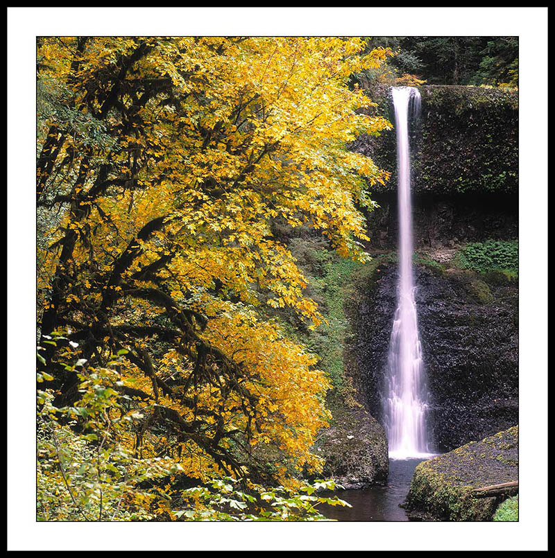 Middle North Falls with Autumn Tree - Silver Falls State Park, Oregon