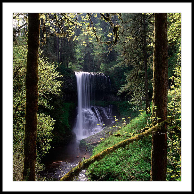 Middle North Falls Through Trees in Spring - Silver Falls State Park, Oregon