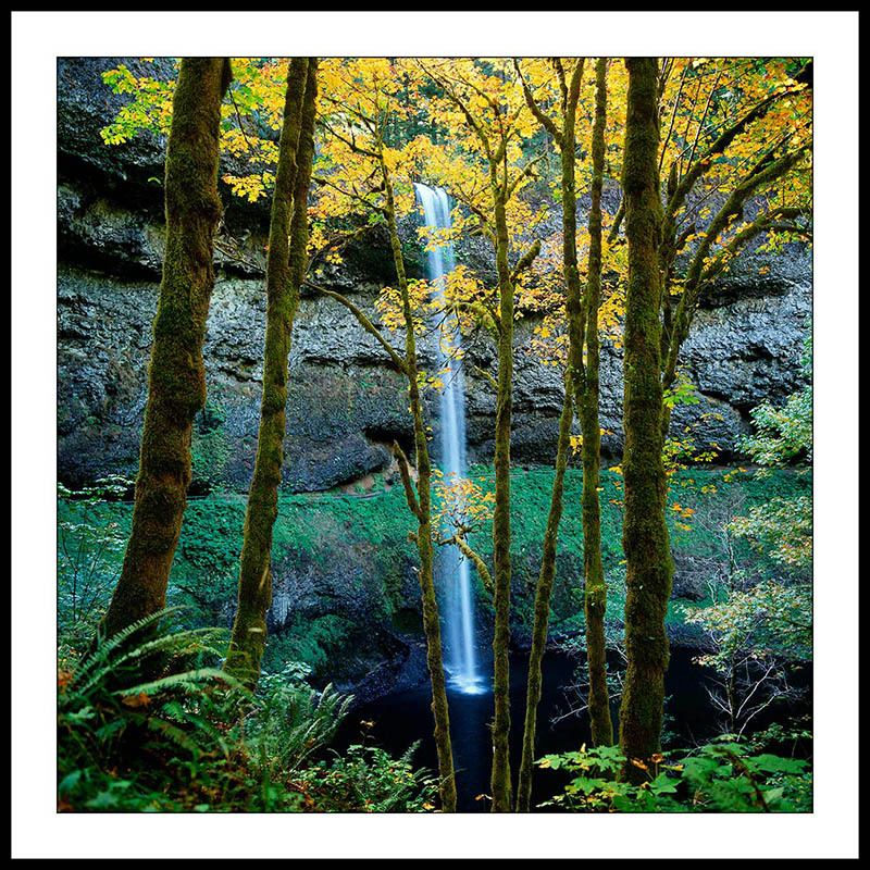 South Falls Through Trees in Autumn - Silver Falls State Park, Oregon