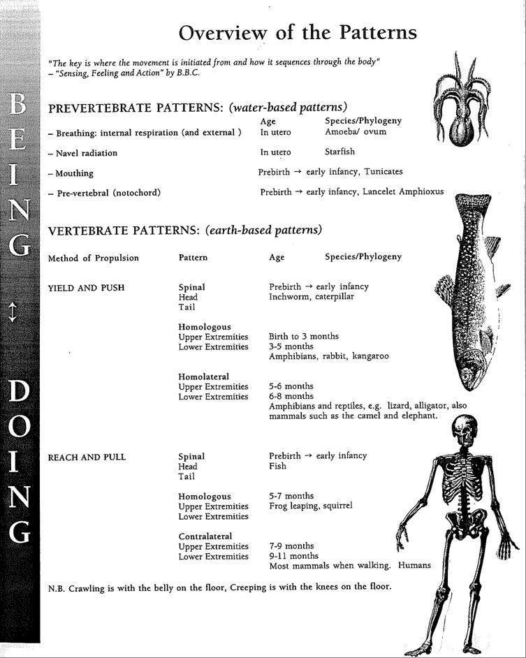 An Overview of Human Developmental Patterns