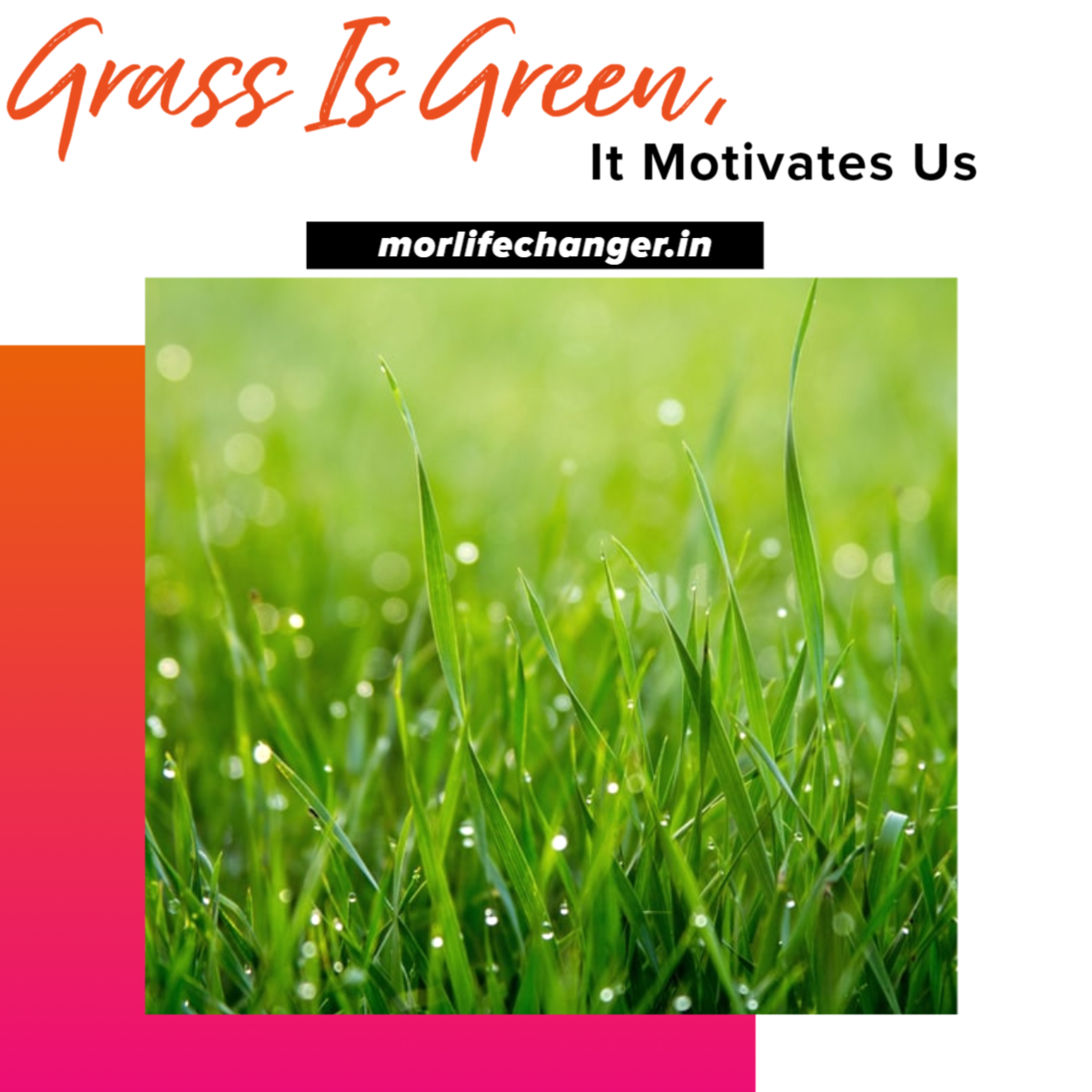 Grass is green it motivates us