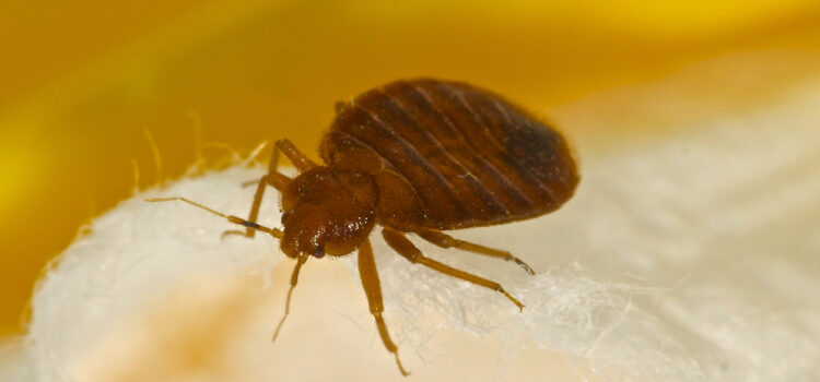 BedBugs- Canton Termite & Pest Control