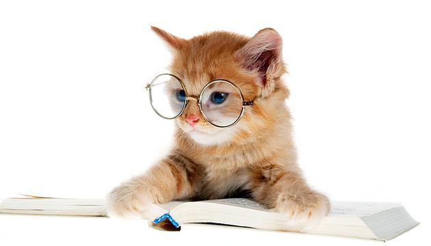 Principais dúvidas sobre gatos
