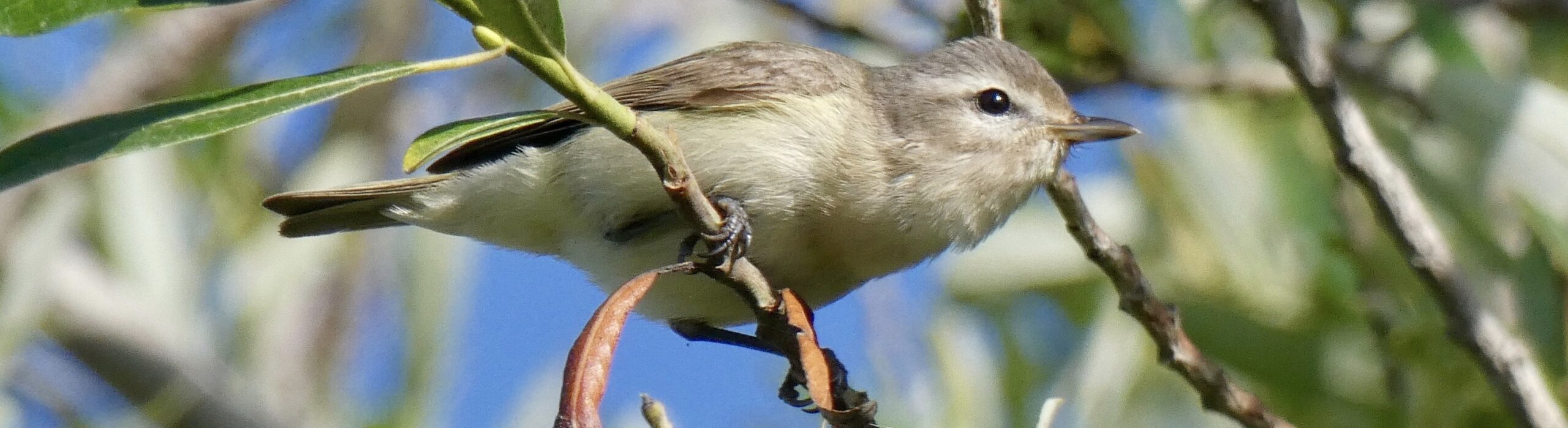 Carpinteria Birdwatchers