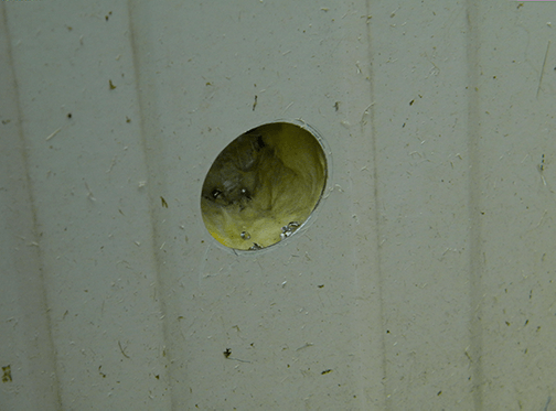 Hole In Metal Shed