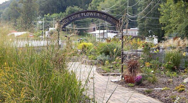 Lake Lure Walking Tour Flowering Bridge