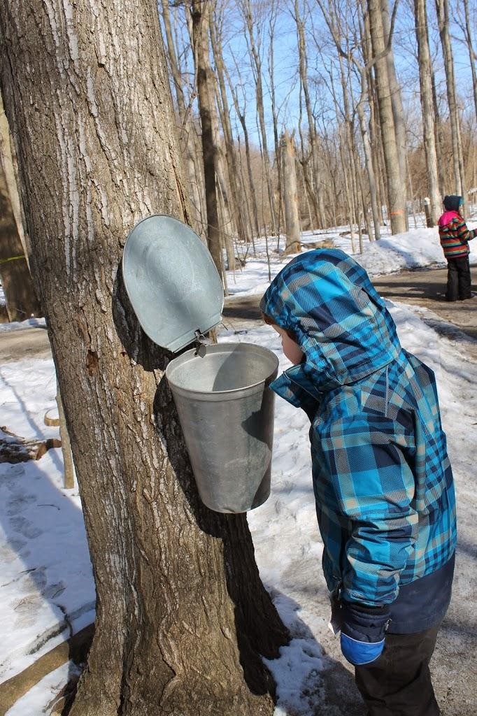 Sugarbush Maple Syrup Festival