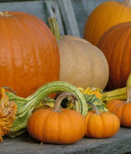 pumpkin projects to sew