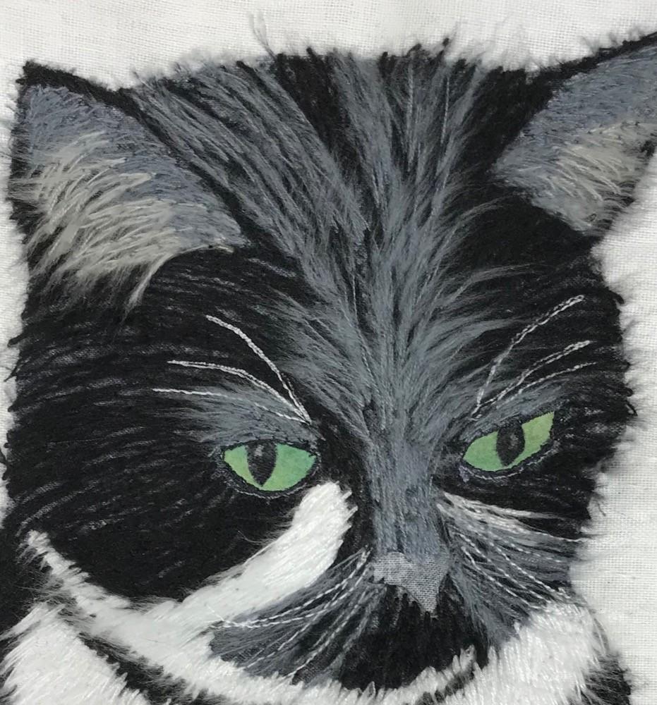 eyebrows on fluffy kitty