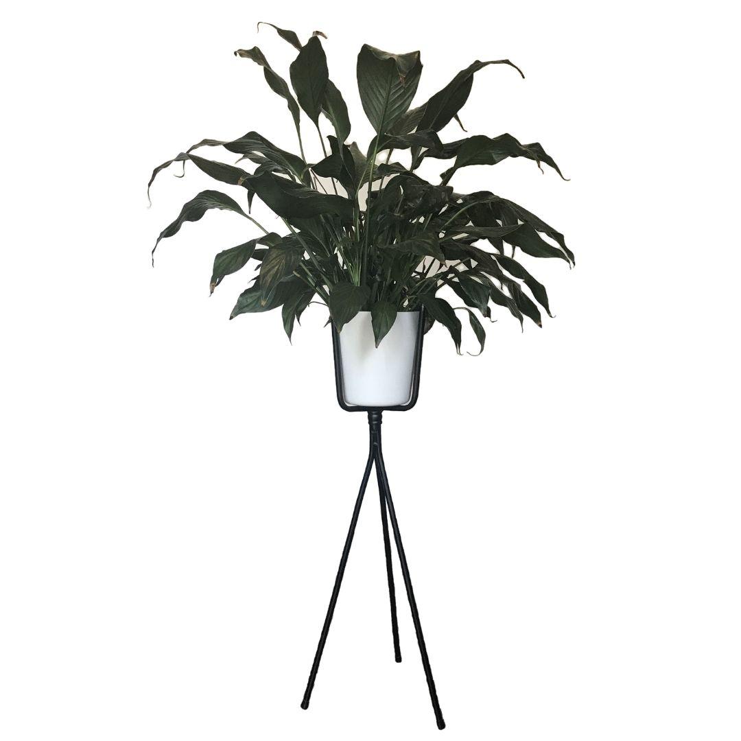 Nifty Planter