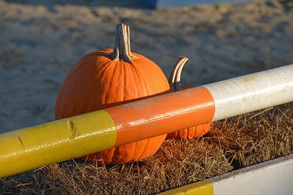 pumpkin_0979
