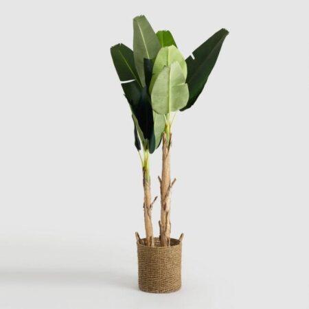 Banana Tropical Palm Tree
