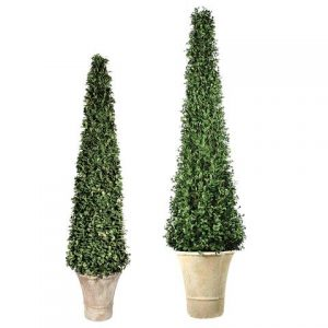 Cone Shaped boxwood topiary