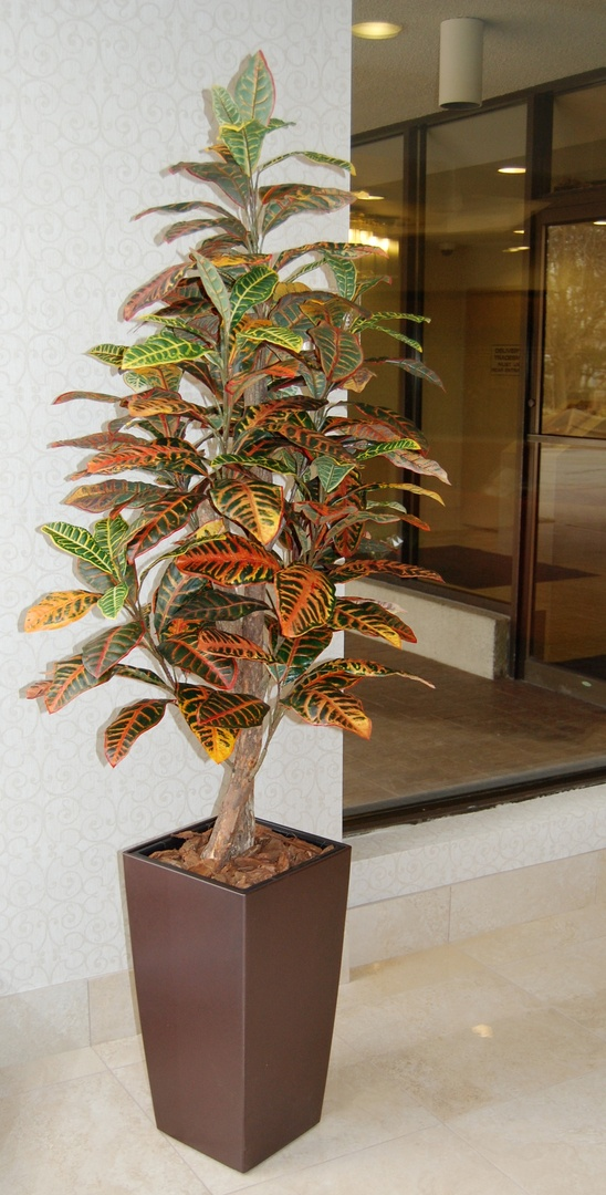 Custom Croton Tree
