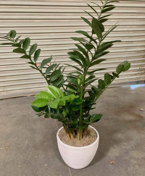 faux zz plant