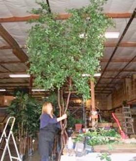 Building custom trees at Pacific Silkscapes
