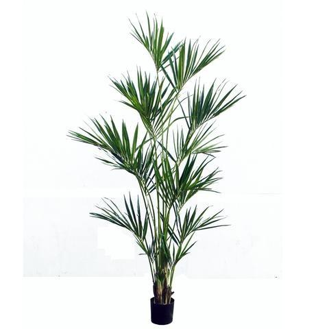 Kentia Tropical Palm Tree