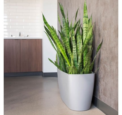 Lechuza lateral floor planters