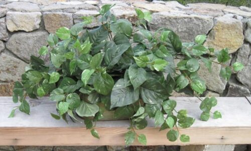 Mixed Green Tabletop