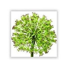 allium silk flower