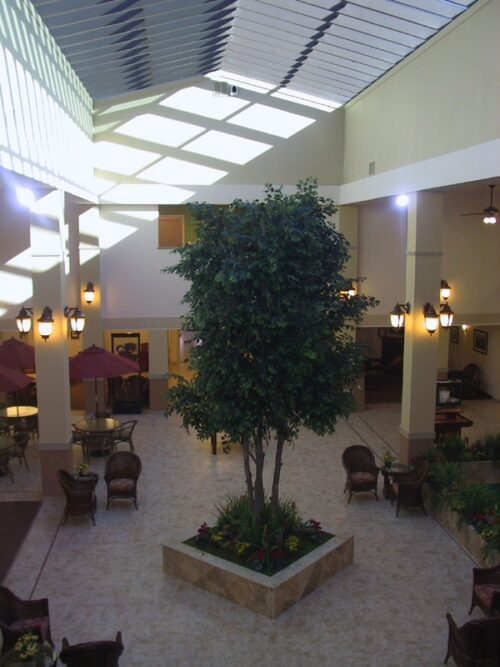 Large commerial artificial ficus tree