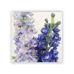 delphinum flower
